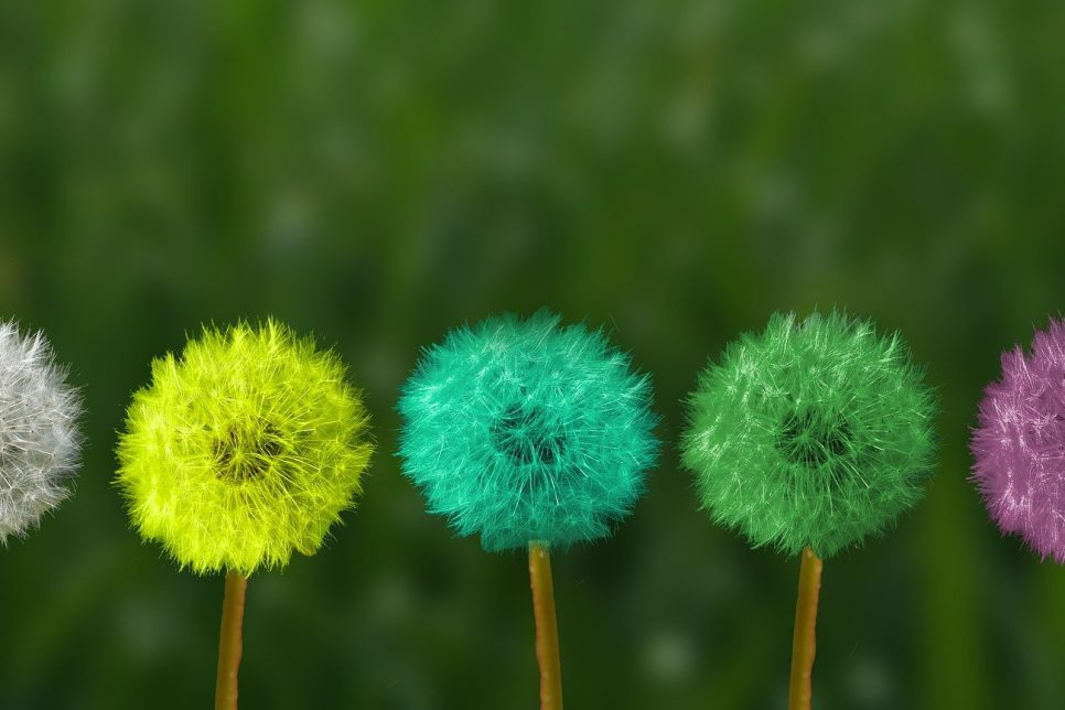 Coloured Dandelions waiting to blow away